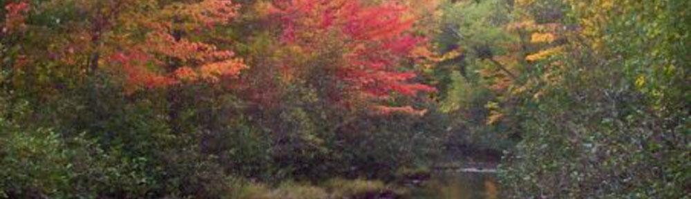 Fall-in-Canada