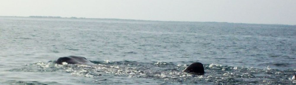 Whale-Sharks,-Mexico