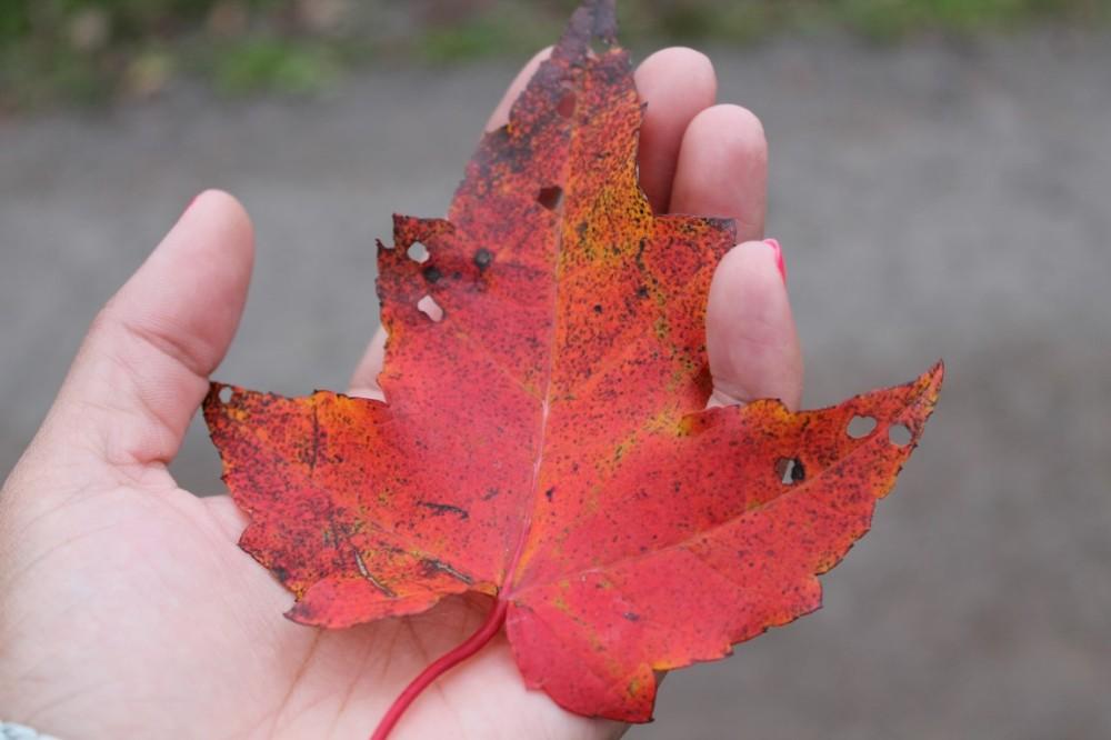 Fall in New Brunswick
