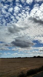 Fields of Natomas