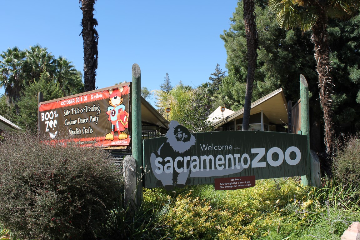 The Sacramento Zoo From The Eyes Of A Child Turquoise Compass