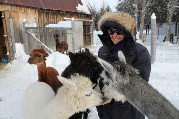 Dream Acres Alpacas