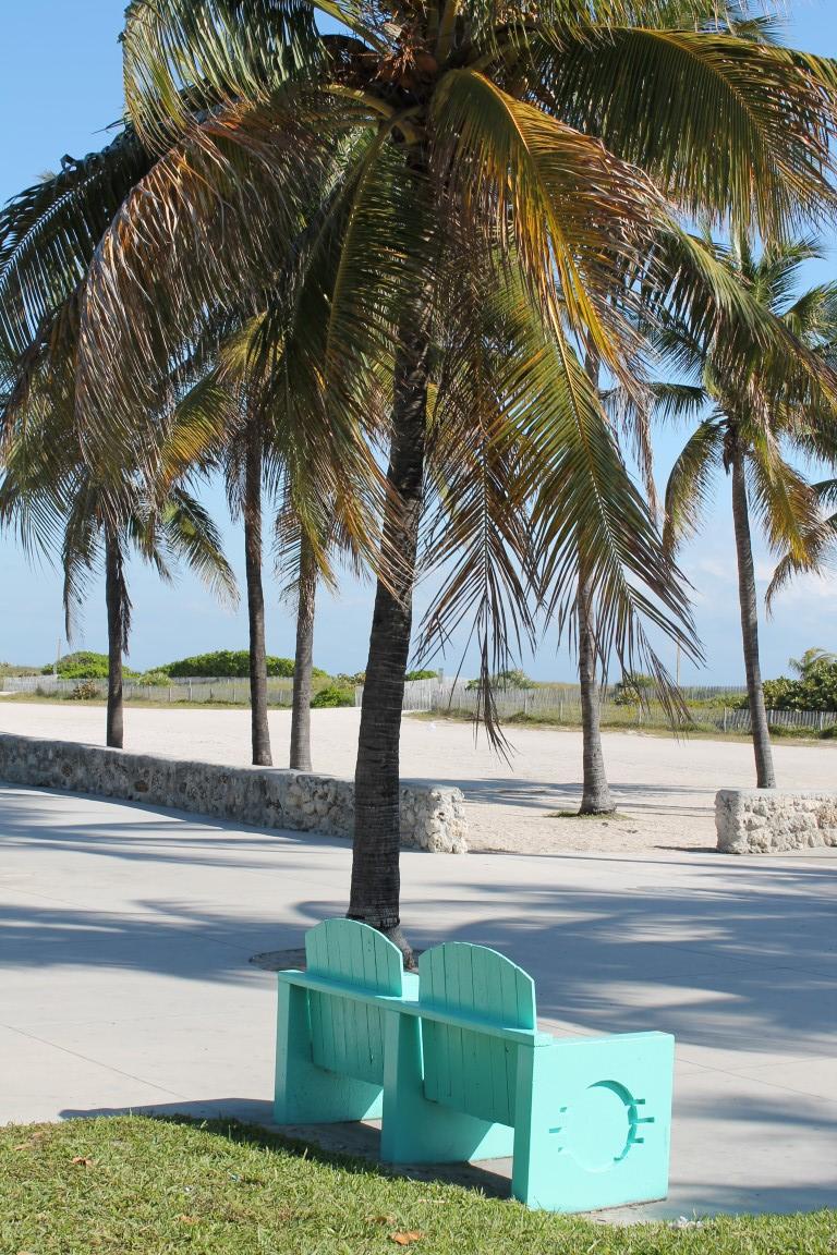 Miami South Beach Local Wildlife: Miami's Turquoise South Beach