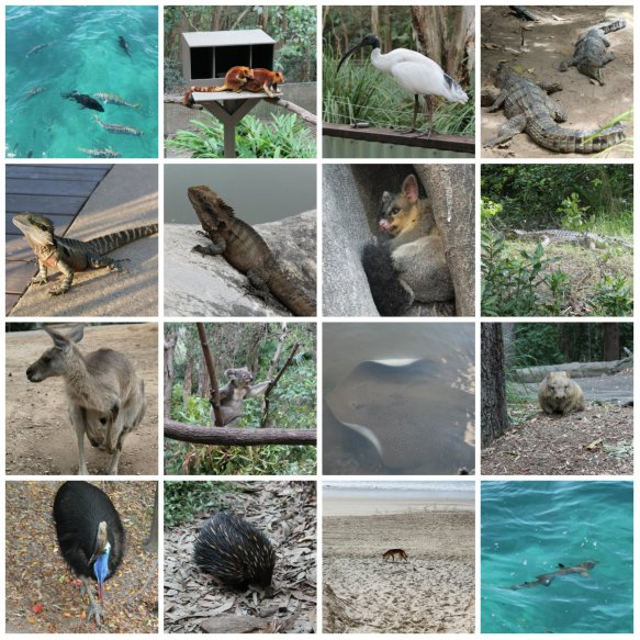 Native Animals in Australia