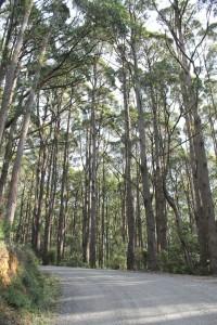 Yarra Ranges National Park