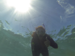 Snorkelling the Great Barrier Reef