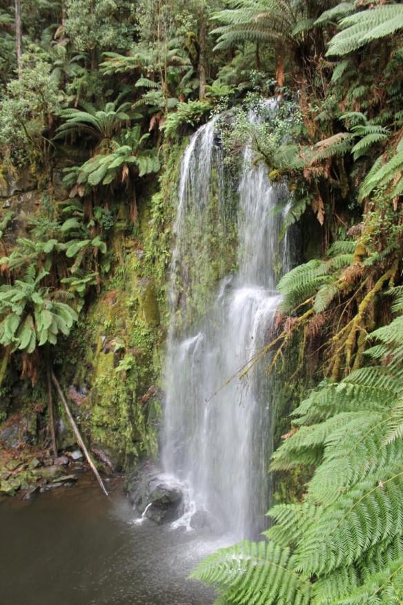 Otway Forest & Beauchamp Falls